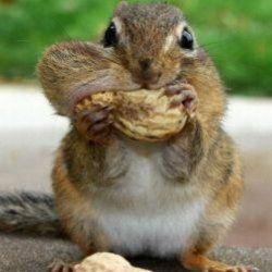 10 Цікавих фактів про тварин, які вас здивують