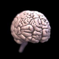 10 Міфів про наш мозок