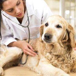 10 Ознак раку у кішок і собак