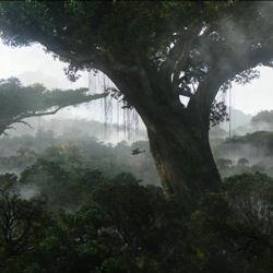 10 Самих фантастичних дерев світу