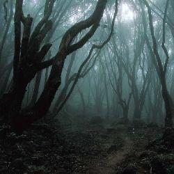 10 Загадкові лісів c привидами