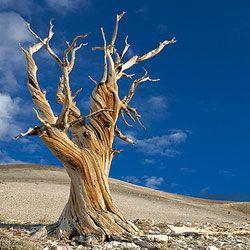 11 Священних і культових дерев