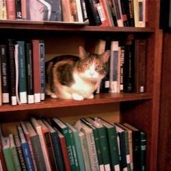 17 Корисних порад для тих, у кого є кішка