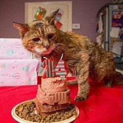 24-Літня кішка поппі визнана найстаршою кішкою в світі