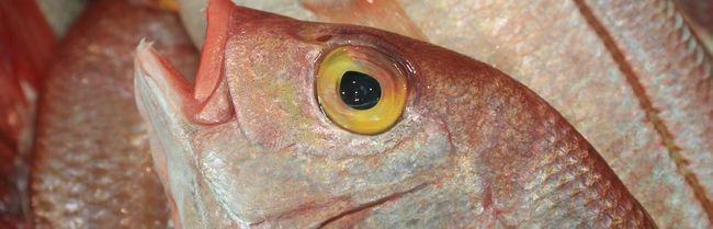 8 Рад, які допоможуть вибрати свіжу рибу на ринку або в магазині