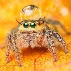 800 Мільйонів тонн видобутку з`їдають павуки за 1 рік