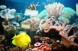 Акваріумні рибки і догляд за ними