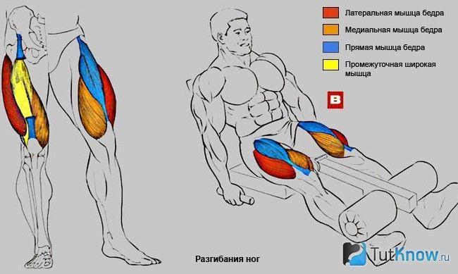 М`язи, задіяні при розгинаннях ніг