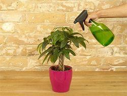Боротьба зі шкідниками кімнатних рослин