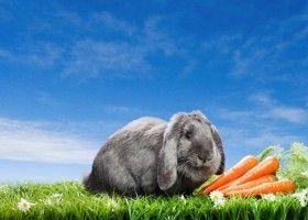 Чим годувати домашнього декоративного кролика?