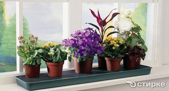 квіти на підвіконні