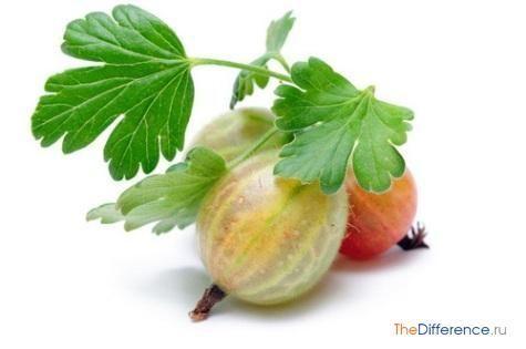 чим відрізняється ягода від овочів