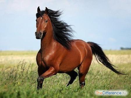Чим відрізняється кінь від коня?