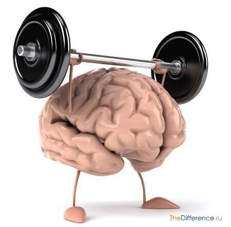 відміну мозку людини від комп`ютера,