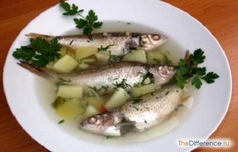 чим відрізняється вуха від рибного супу