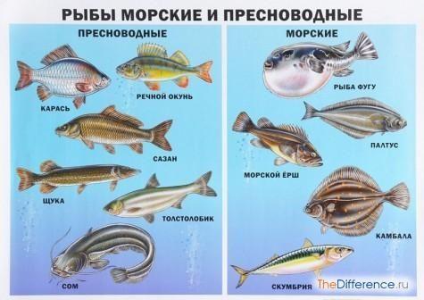 Чим відрізняються морські риби від річкових?