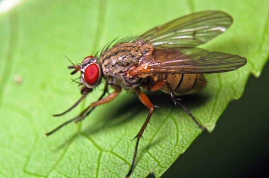 то робити якщо на грядці завелася луковая муха