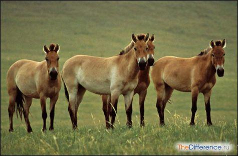 Що їдять коні?