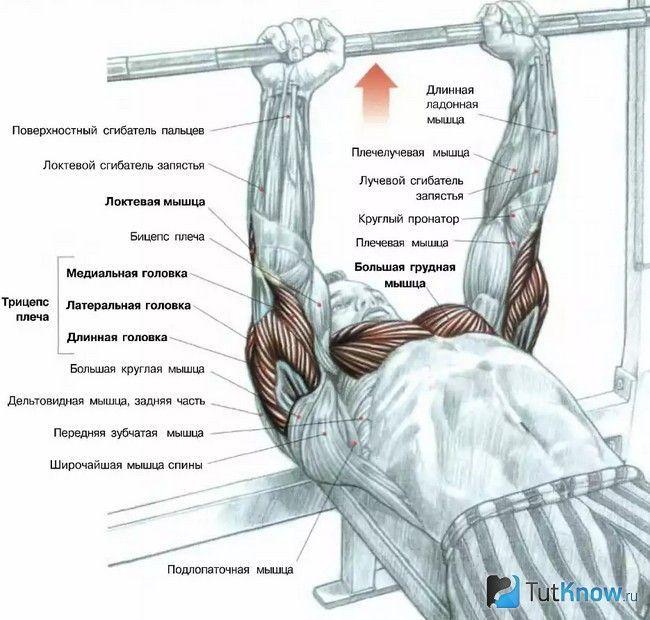 Схема залучення м`язів при виконанні жиму лежачи