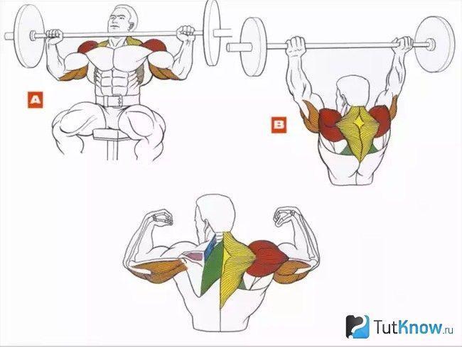 Схема залучення м`язів при виконанні жиму штанги сидячи