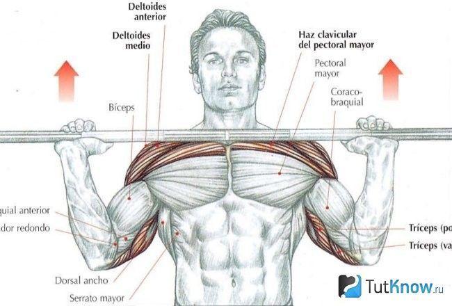 Схема задіяних м`язів і виконання ривка штанги