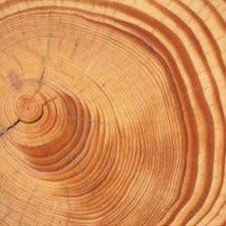 Дерева розкривають таємниці сонячних спалахів давнини