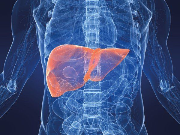 печінка людини