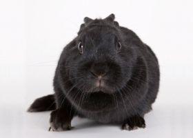 Домашні декоративні кролики: догляд