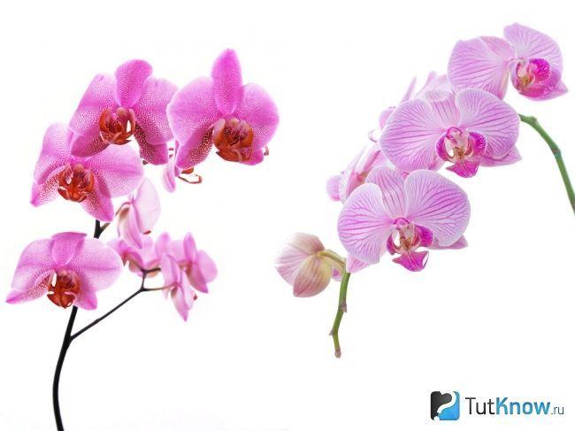Вирощування і догляд за орхідеями в домашніх умовах