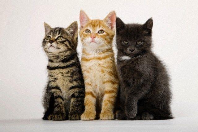Дресирування кішок - як навчити кішку сидіти