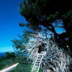 Гнізда для людей і інші неймовірні будинки на деревах
