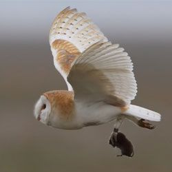 Гризуни допомагають збільшувати чисельність птахів