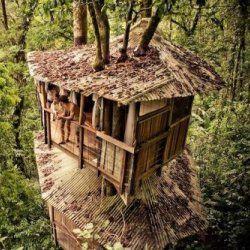 І на деревах можна побудувати будинок