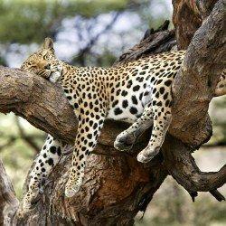 Цікаві факти про те, як сплять тварини