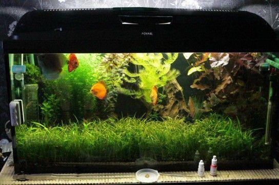 Методи боротьби з зеленим нальотом на стінках акваріума