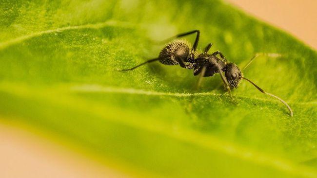 Чим небезпечні садові мурахи і 6 способів їх позбутися