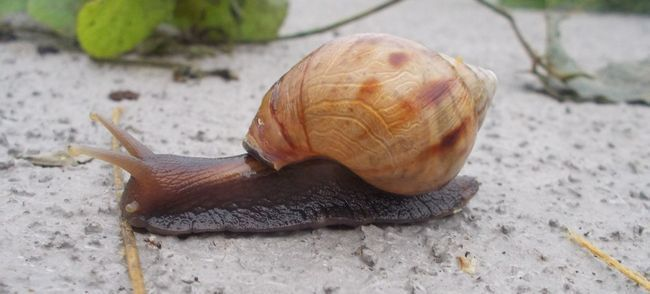 snail-685476_1280