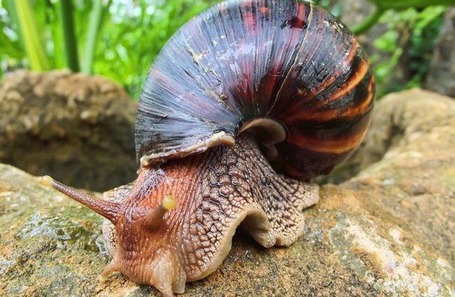 snail-102715_1280