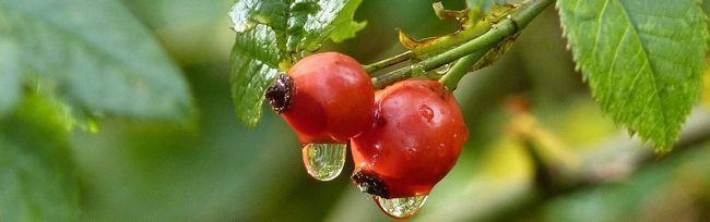 drop-of-water-994558_1280