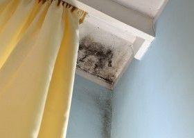 Як позбутися від грибка на стелі