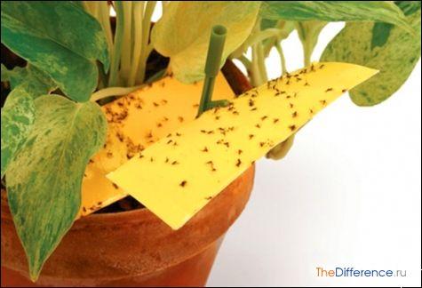 як позбутися від мошок в кімнатних квітах