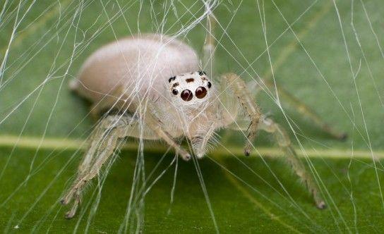 Звідки беруться в квартирі павуки?
