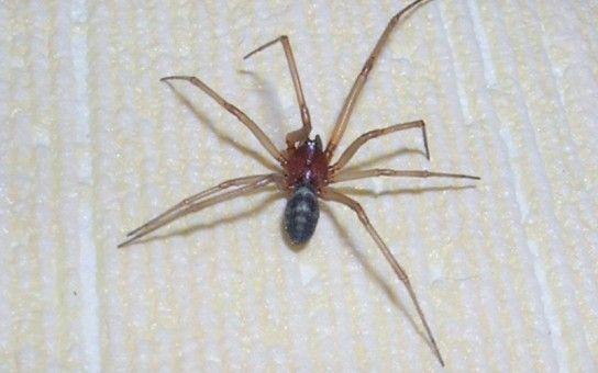 Позбутися від павуків раз і назавжди!