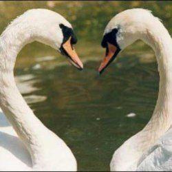 Як еволюціонує любов