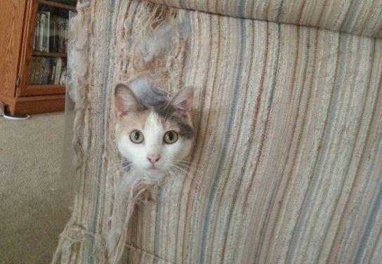 Як кішку відучити дерти шпалери?