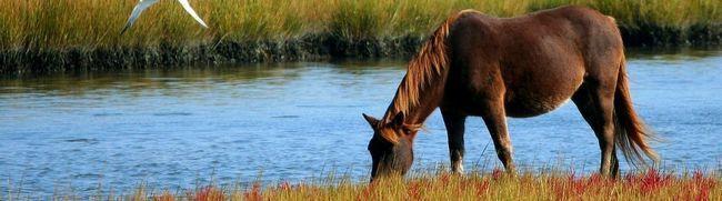 Як красиво назвати коня