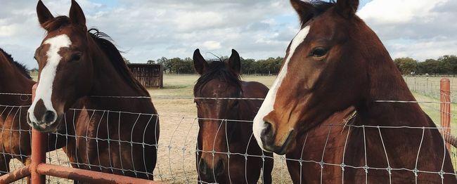 horses-1149442_1280
