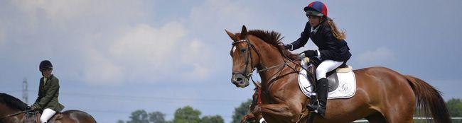 horse-965589_1280