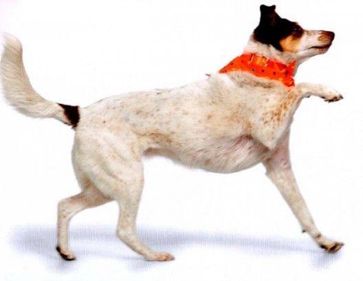Як навчити собаку давати лапу?