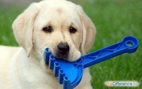 Як навчити собаку команді апорт?